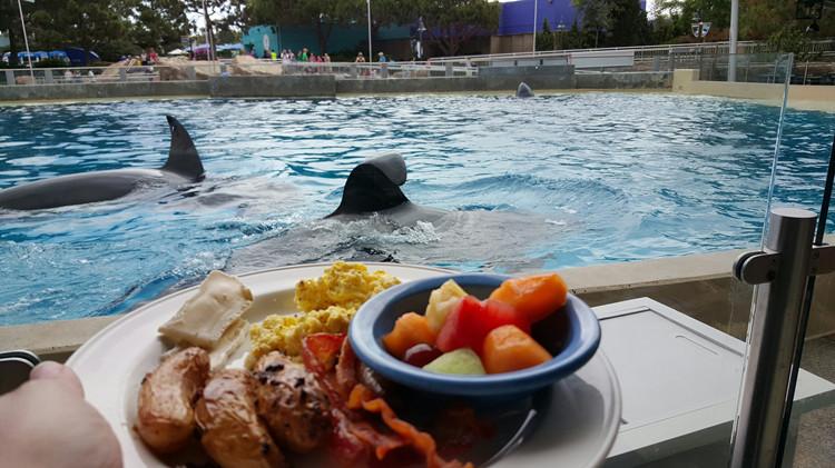 美国 奥兰多  奥兰多海洋世界与虎鲸shamu共进午餐体验  虎鲸是鲸类中