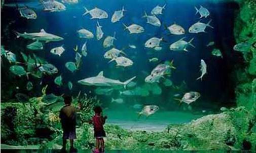 chc04上海 长风公园海洋世界门票 白鲸馆门票 电子票