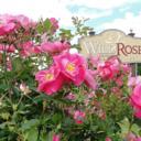 Auberge Wild Rose Inn